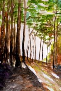 'Fall in Nags Head Woods'